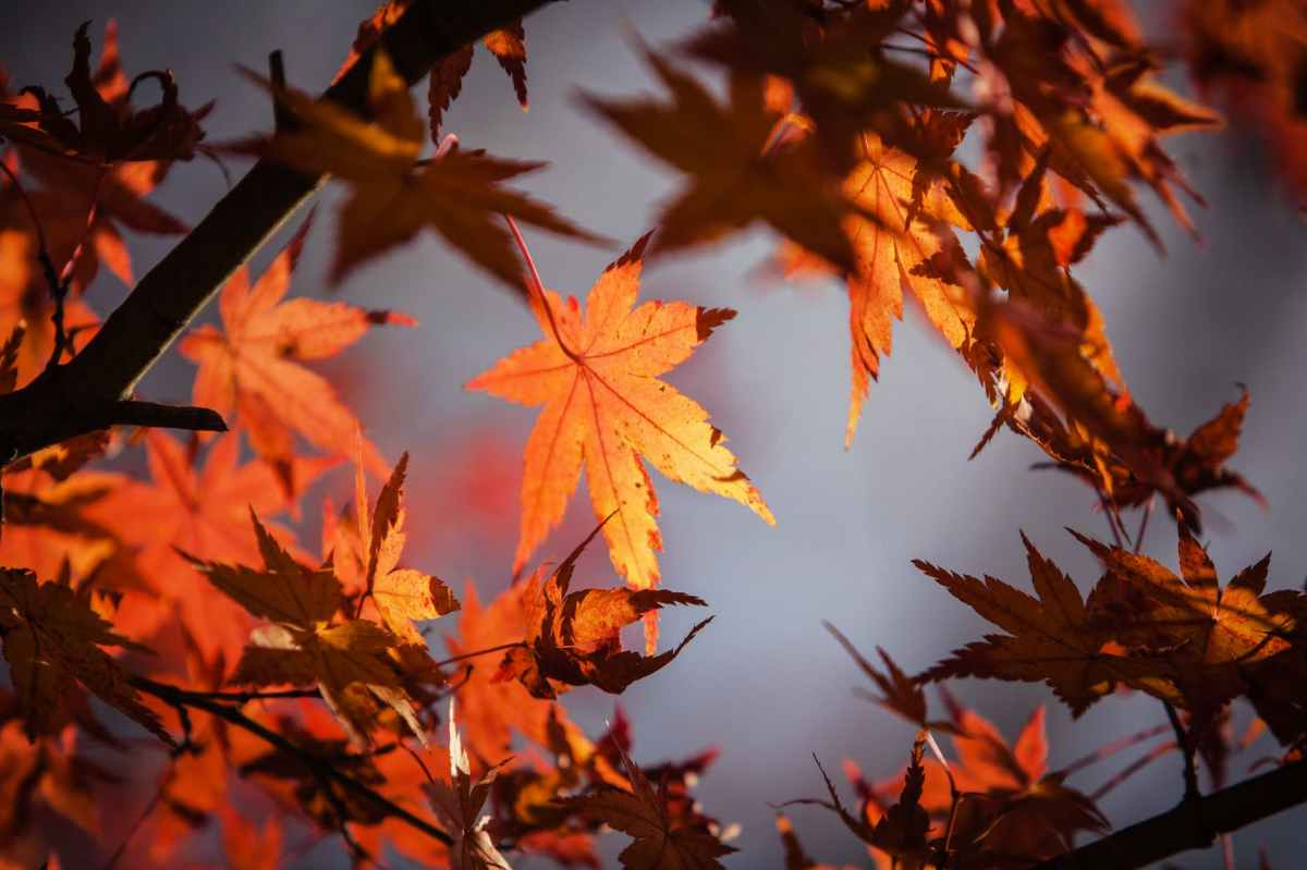 Un mot qui illustre cette saison - tag rêve d'automne