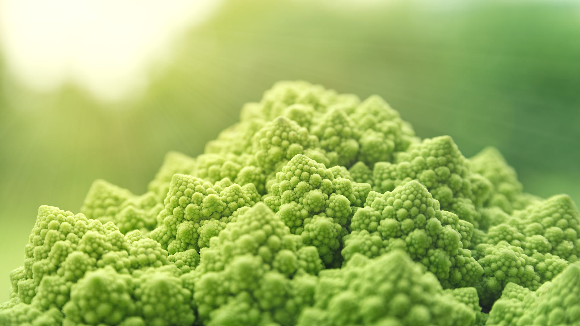 tilt lens photo of green cauliflower